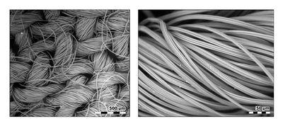 تصویر میکروسکوپی 50 تا 500 برابری از ماسک