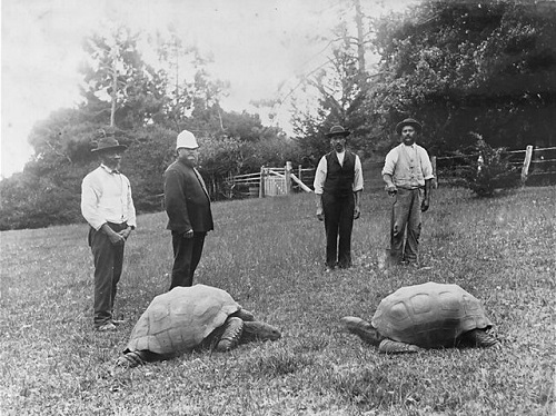 لاکپشت ۱۸۸ساله، سالخوردهترین حیوان روی خشکی
