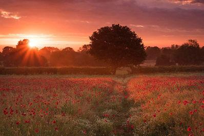 عکاس، سیمون لهآ از بریتانیا.