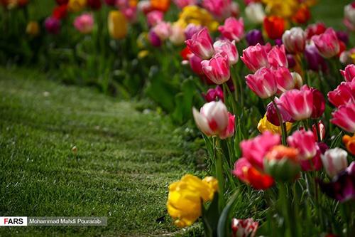 جشنواره گل لاله در کرج