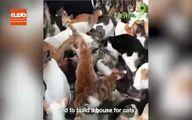 فیلم / زنی که 200 گربه در خانه دارد