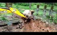 نجات عجیب یک فیل از سقوط و تشکر حیوان از بیل مکانیکی