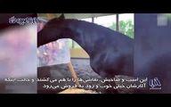 اسب سرکشی که دوساله نقاش شد