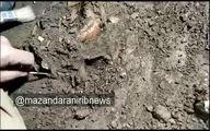 اسکلت کودک ۱۲ هزار ساله در یک غار بهشهر