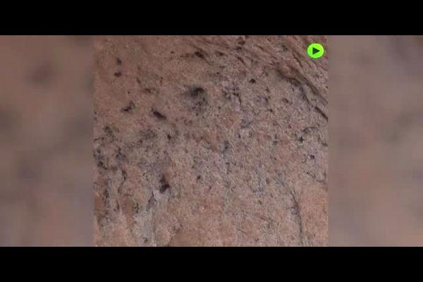 دندانهای کشف شده خفاش خونآشام 100 هزارساله